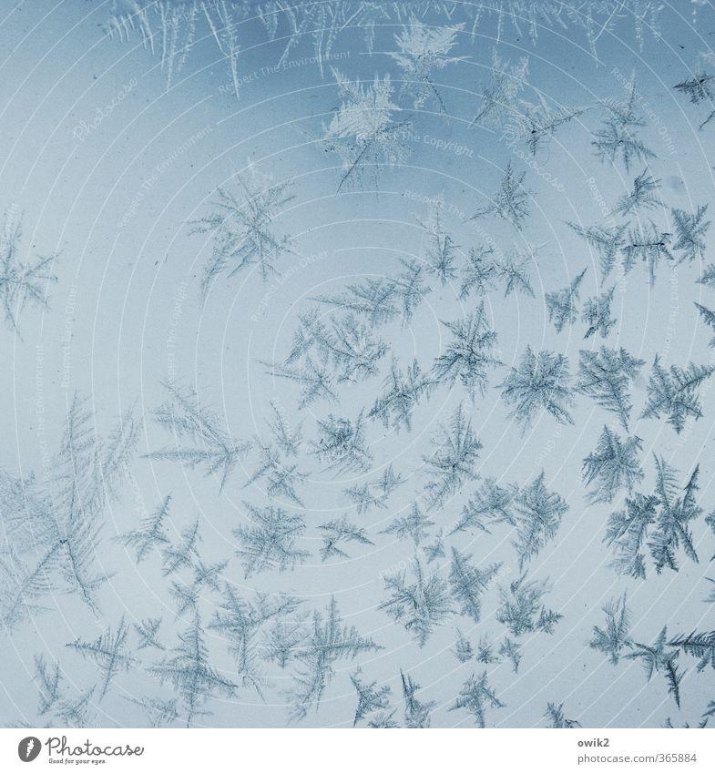 ice sheet Winter Ice Frost Ice crystal Frostwork Car Window Glass Freeze Thin Authentic Sharp-edged Small Near Point Thorny Many Crazy Blue Design Idyll Bizarre