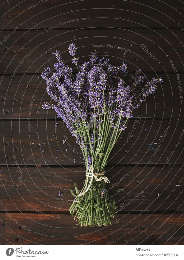 a bunch of lavender Lavender Ostrich Bouquet Plant sniff Fragrance Provence Wooden table purple Harvest Violet bleed Close-up flowers Blossoming