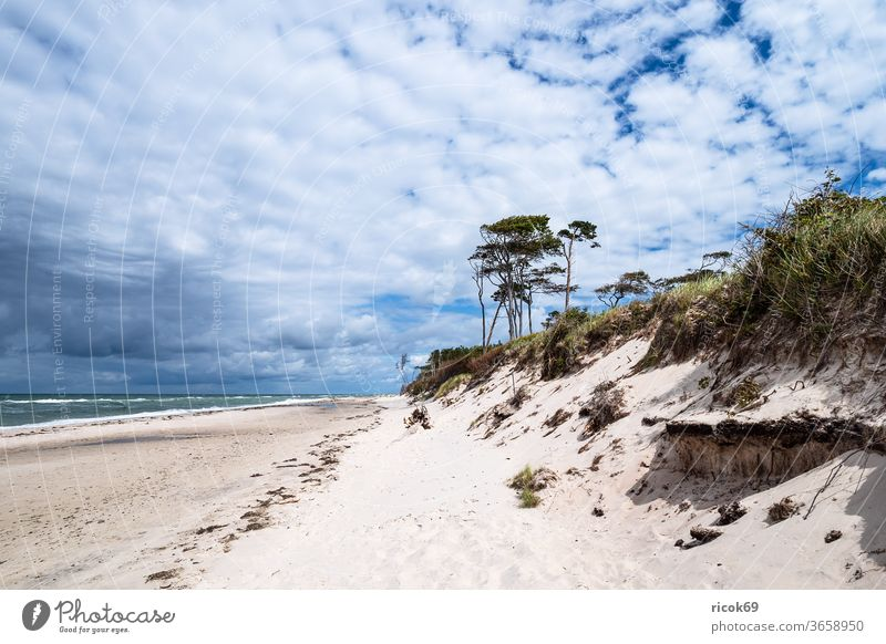 The west beach on the Fischland-Darß Western Beach Coast Baltic Sea fischland-darß Baltic coast Ocean tree Forest huts coastal forest Sky Clouds Blue