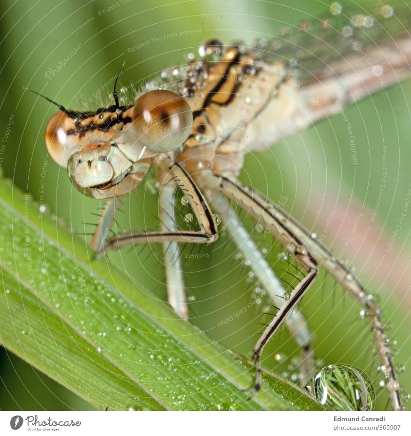 Morning Dew Dragonfly Head Eyes Legs New Media Instant messaging Nature Elements Water Drops of water Spring Grass Leaf Meadow Lakeside Deserted Helicopter
