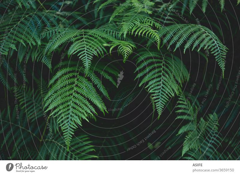 Fern leaves background fern nature bracken vegetation forest young beautiful spring botany summer dark abstract freshness greenery frond flora park grass