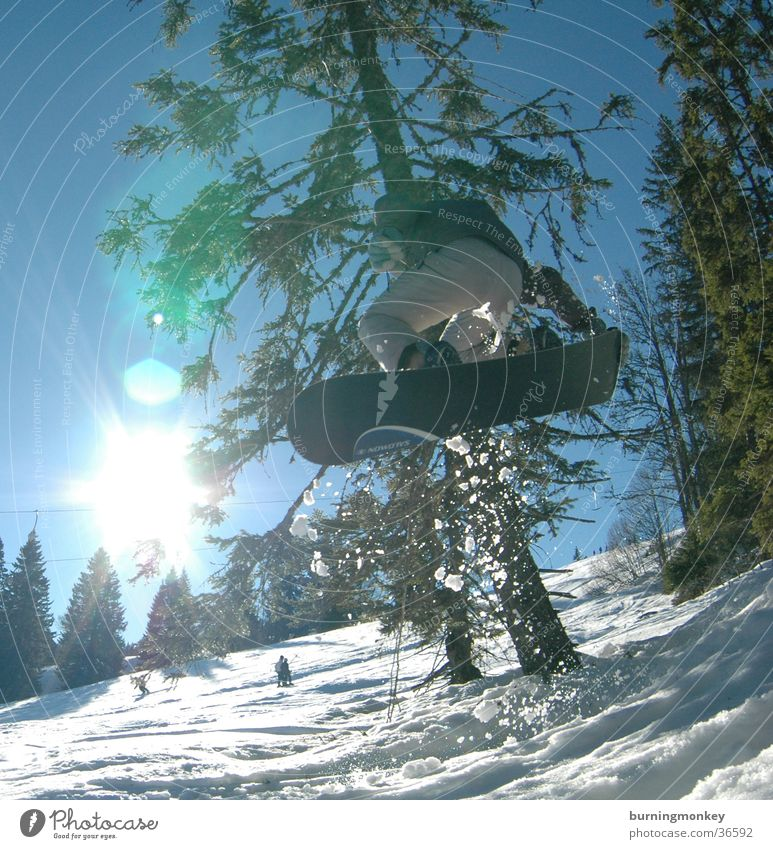 Sun Mountain Snow Style Sports Jump Action Tall Posture Snowboard Winter sports Coniferous trees Winter vacation Freestyle Talented Funsport