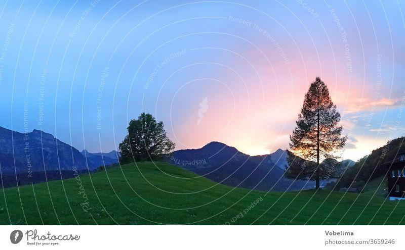 Evening with Bizau in Vorarlberg bizau Back-light Larch Alps tree Bezau Forest of Bregenz bregenzerwald mountains Europe Sky Landscape austria Sun Sunlight