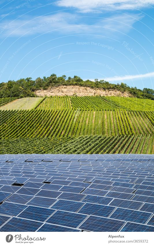 in vino elektricitas Vineyard photovoltaics Solar cell Bunch of grapes Deserted Wine growing Agricultural crop Winery Nature alternative energy green energy