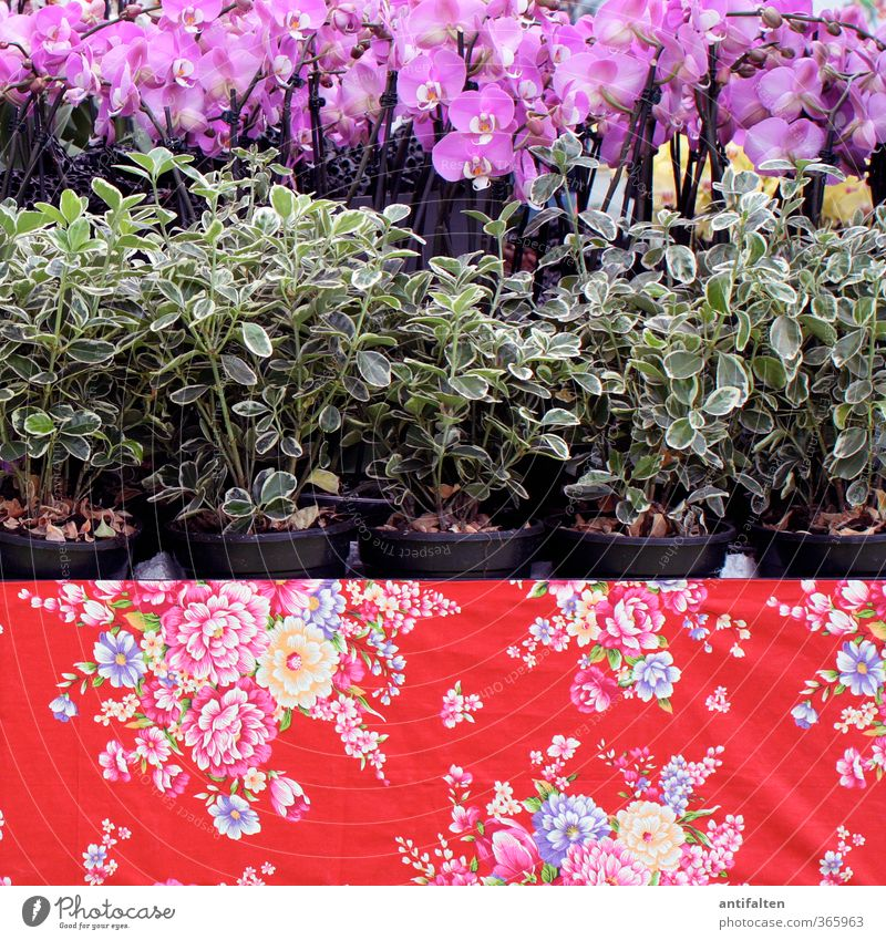 It won't get any flowerier Nature Plant Spring Summer Flower Orchid Leaf Blossom Pot plant Paper Packaging Decoration Collection Ornament Flowery pattern