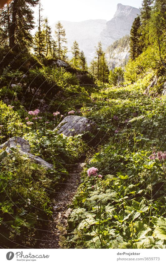 Hiking trail in the Berchtesgarden National Park Wide angle Panorama (View) Long shot Central perspective Deep depth of field Sunrise Sunlight