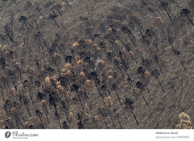 Charred trees after wild fire forest charred burn lifeless dry nature destruct landscape disaster ecology woodland peaceful daytime scenery environment