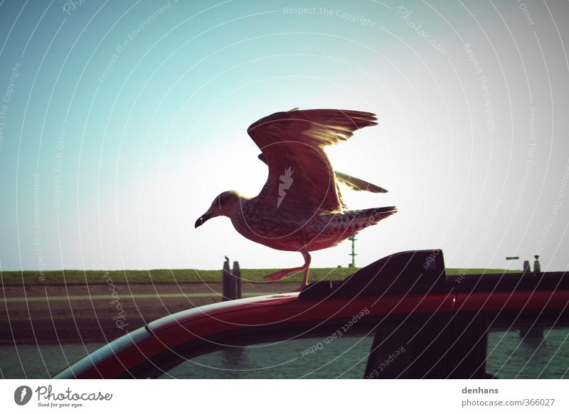 only flying is better Vacation & Travel Ocean Cloudless sky North Sea Dike Means of transport Motoring Car Bird Wing Seagull 1 Animal Flying Stand Brash Above