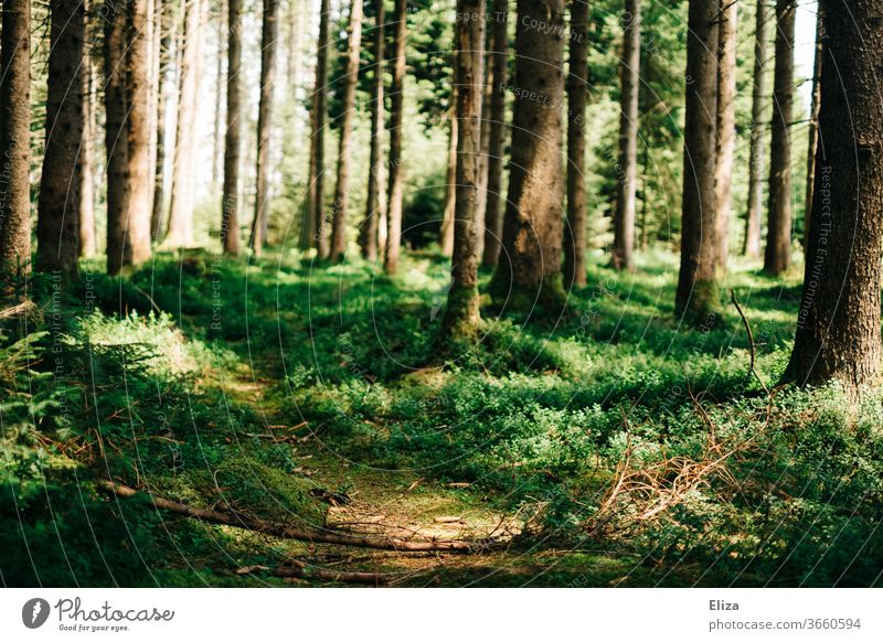 A trail in the forest Trail Forest path off Nature Lanes & trails green tree Environment Hiking Footpath Plant Deserted Calm Sunlight Exterior shot Light