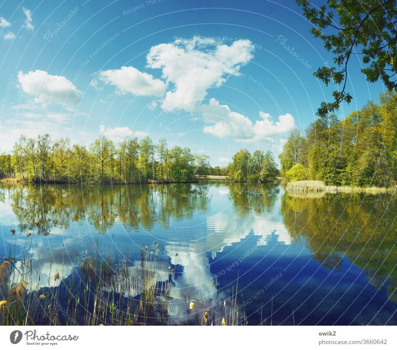 Over large pond Lake Idyll Panorama (View) Plant Water Sky Reflection Landscape Nature windless Exterior shot Deserted Colour photo Clouds Beautiful weather