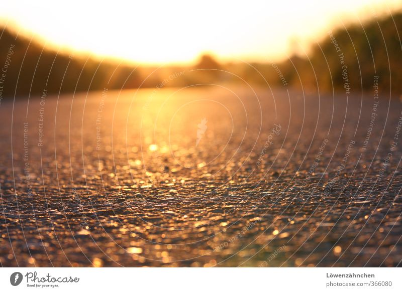 golden road to happiness Summer Beautiful weather Warmth Grass Field Street Lanes & trails Footpath Illuminate Glittering Bright Yellow Gold Moody Contentment