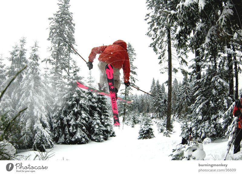 Tree Forest Snow Jump Skiing Skier Extreme sports Powder snow
