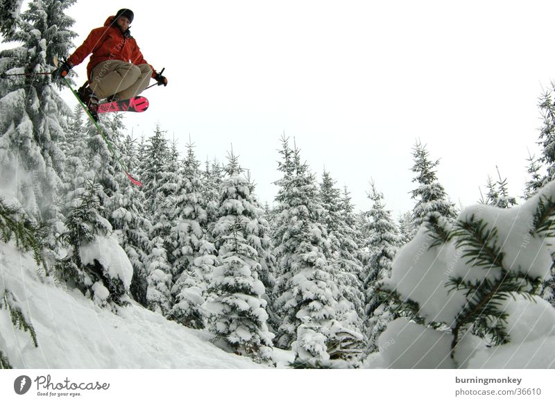 Tree Forest Snow Jump Skiing Skier Extreme sports Powder snow
