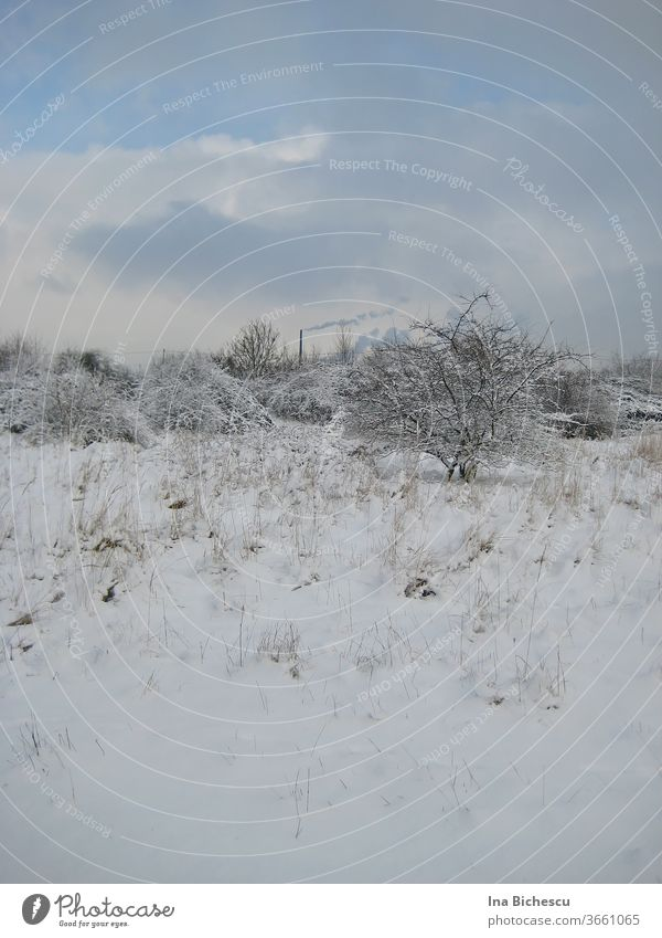 A winter landscape in light tones with few dark colours. The ground, the tree, the bushes in the distance are covered with snow, on the sky hang white and light grey clouds, from the snow protrude light, thin and dry plants stems.