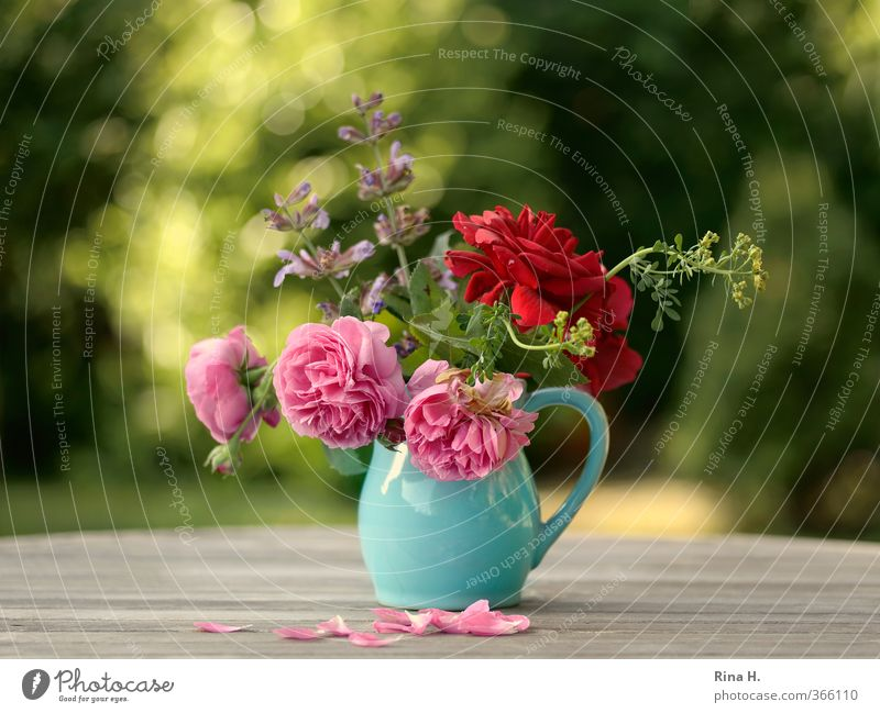 Green Summer Red Garden Natural Moody Pink Beautiful weather Blossoming Joie de vivre (Vitality) Bouquet Turquoise Vase Faded Wooden table Rose leaves