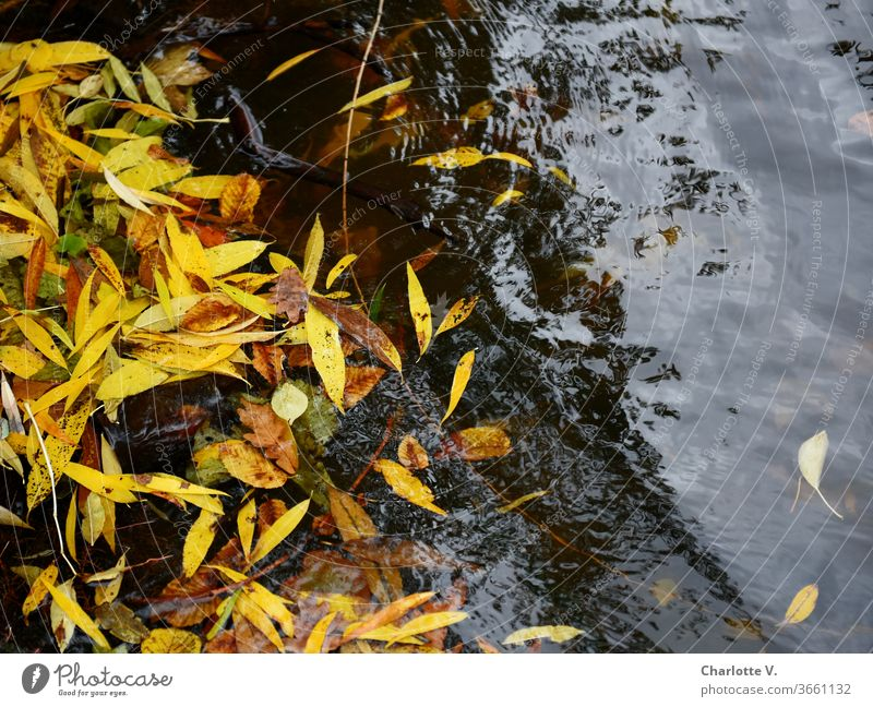 UT HH 2019 | Leaves Autumn leaves Autumnal foliage Autumnal colours Exterior shot Yellow Colour photo Nature Deserted Day Transience Change already luminescent