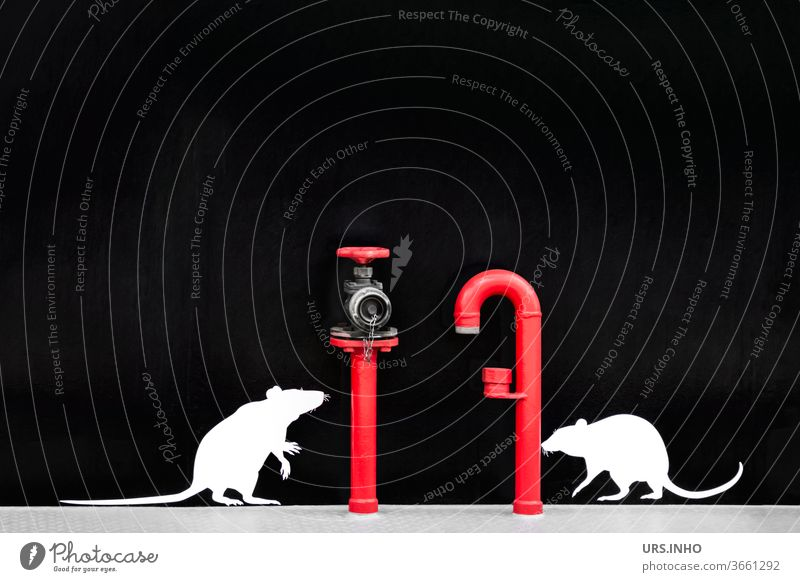 two small, cute rats want to climb the pipe and the hydrant - but they are only dummies glued on Rodent White Red conduit Conduit Copy Space Black Silhouette