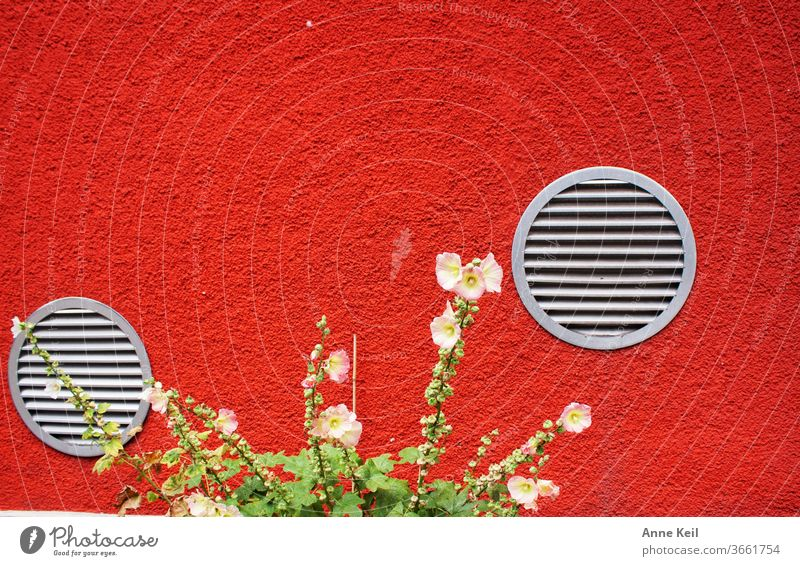The orange-red façade of the house with the round silver ventilation grilles amazed them. She let the beautiful flowers linger. Colour photo Exterior shot