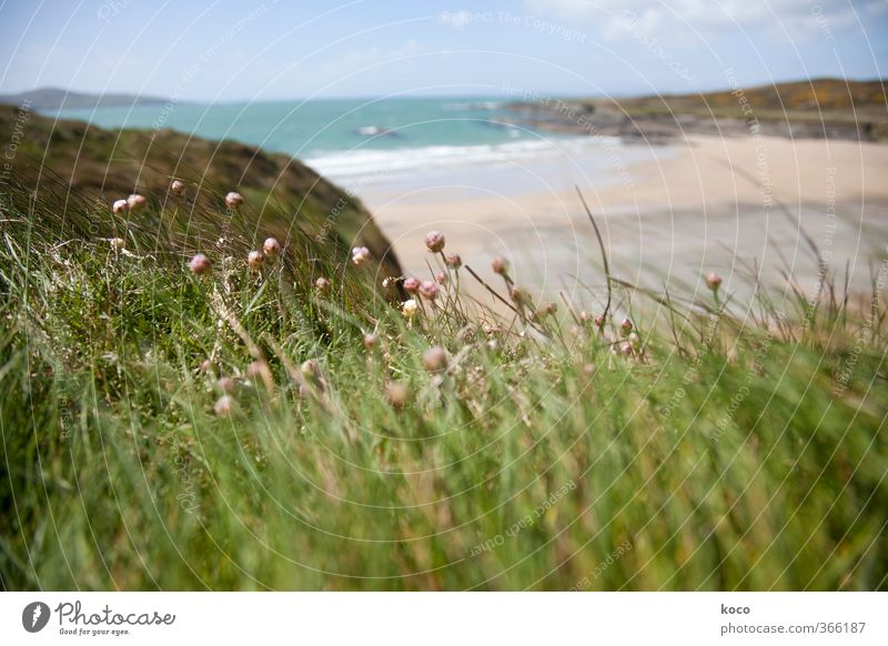 Wind and sea Nature Landscape Plant Sand Water Sky Clouds Spring Summer Beautiful weather Flower Grass Blossom Meadow Waves Coast Beach Bay Ocean Blossoming