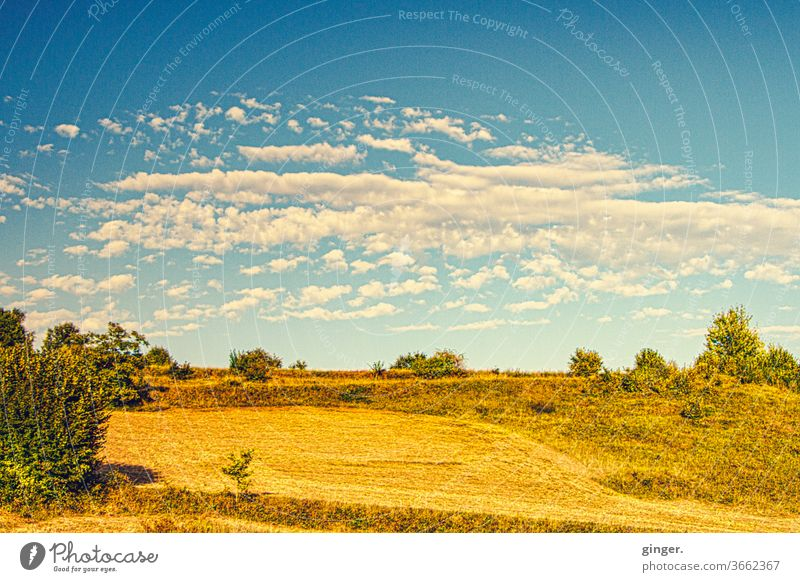 Mediterranean steppe - Island of Pag Steppe Landscape Exterior shot Deserted Sky Grass Nature Plant Beautiful weather Sunlight bushes Far-off places Sparse