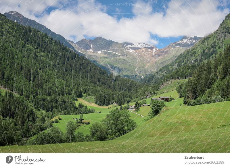 Hiking in the Pflerschtal in South Tyrol with alpine meadows Valley Meadow Alpine pasture mountains Alps Idyll slope Coniferous forest spruces Sky Clouds green