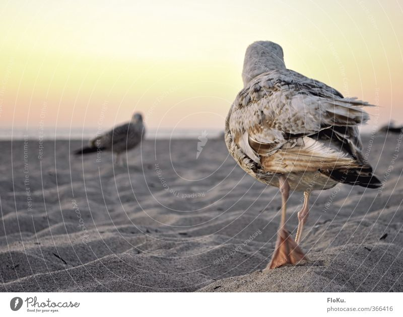 Duel on the beach Vacation & Travel Trip Far-off places Summer vacation Beach Ocean Sand Cloudless sky Beautiful weather Coast Animal Wild animal Bird Wing 2