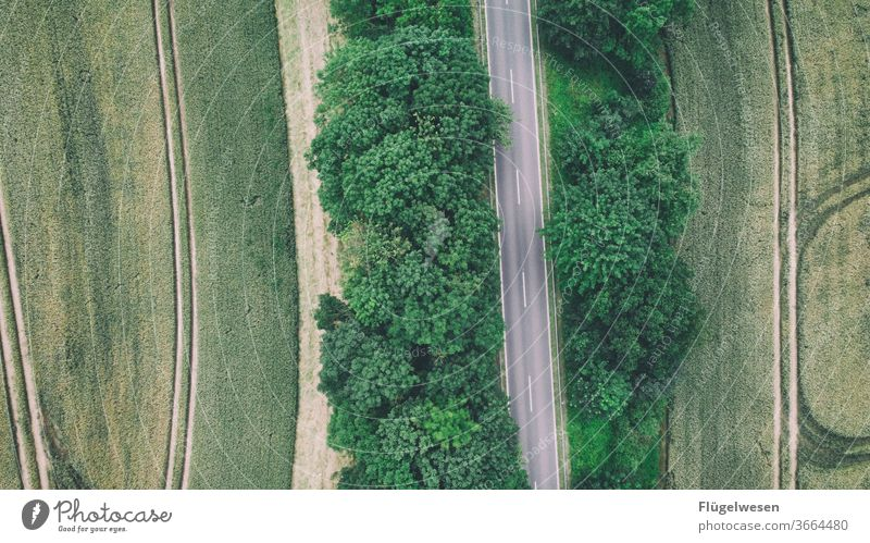 Field Forest Forest Road Margin of a field Working in the fields field flora Road traffic Street Pavement Roadside Tram trees forest aerial photograph