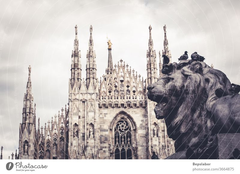 Close up of the Lion of Vittorio Emanuele II monument, the  Milan Duomo on the background Christianity anatomy ancient animal antique architecture art artistic