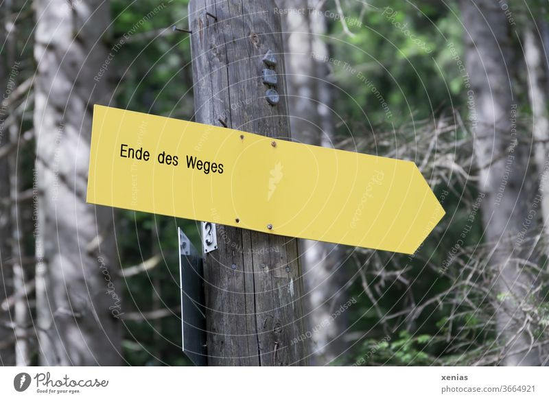 The yellow sign in the forest announces the end of the path End off Yellow Forest Road marking Lanes & trails Signs and labeling Direction Signage Clue xenias