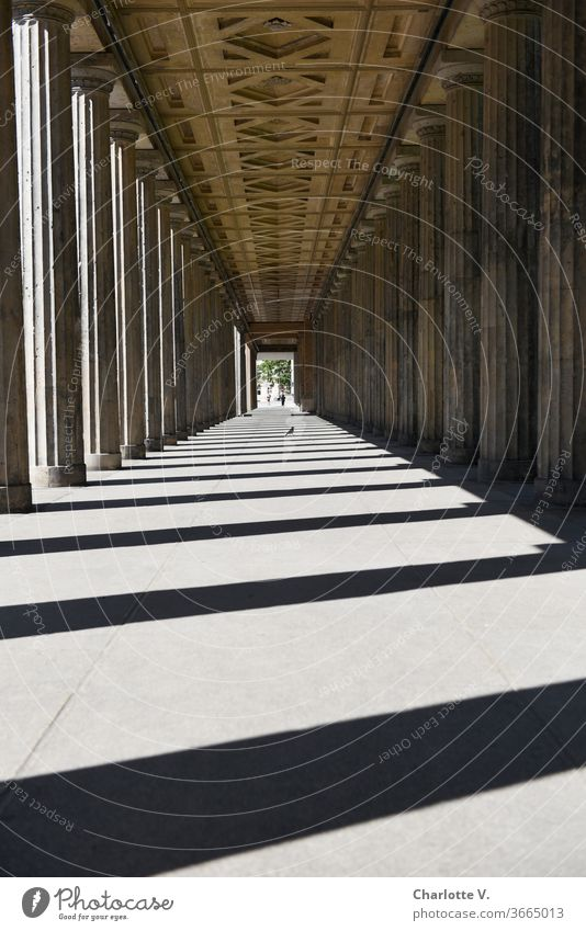 Colonnade with crow and man | At the colonnade courtyard on the Museum Island portico columns Light and shadow Light and shadow play Exterior shot Contrast