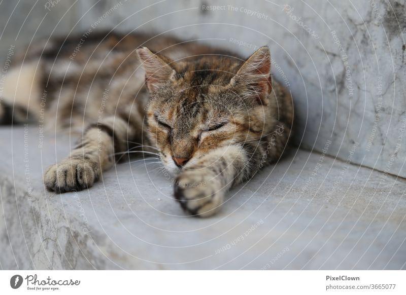 Cat taking a nap pets Pelt One animal Outdoors Nap, sleep, mammal, relax,