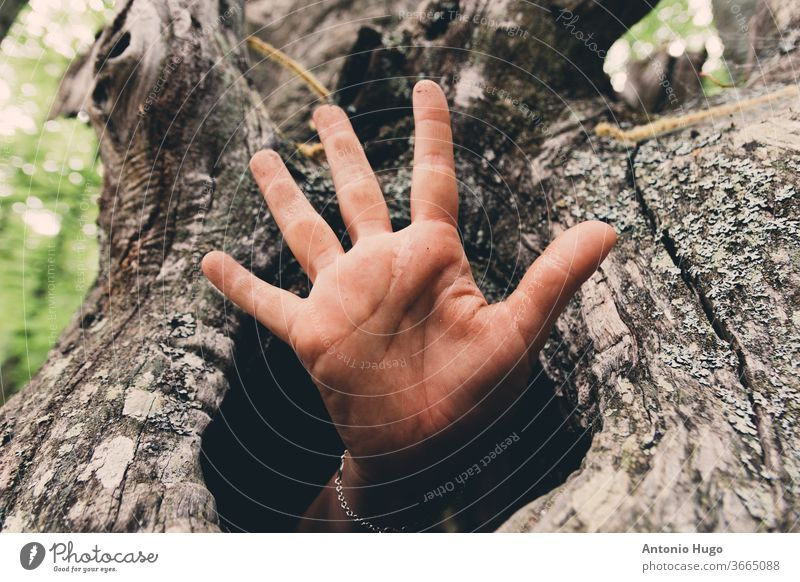 Hand coming out of a tree person lifestyles one person photography textured touching color image horizontal hug protection women woodland affection arms