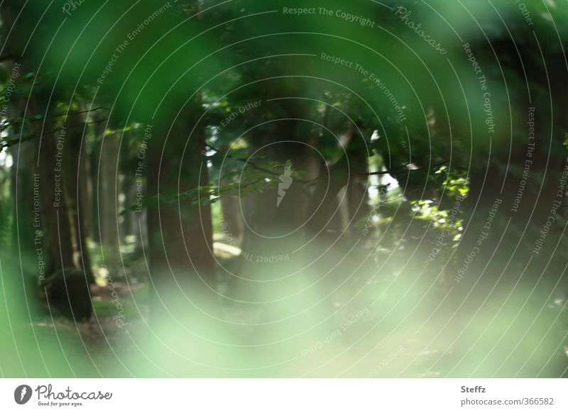forest secret Environment Nature Landscape Plant Summer Tree Tree trunk Leaf Forest Clearing Edge of the forest Green Calm Forest atmosphere Mood lighting