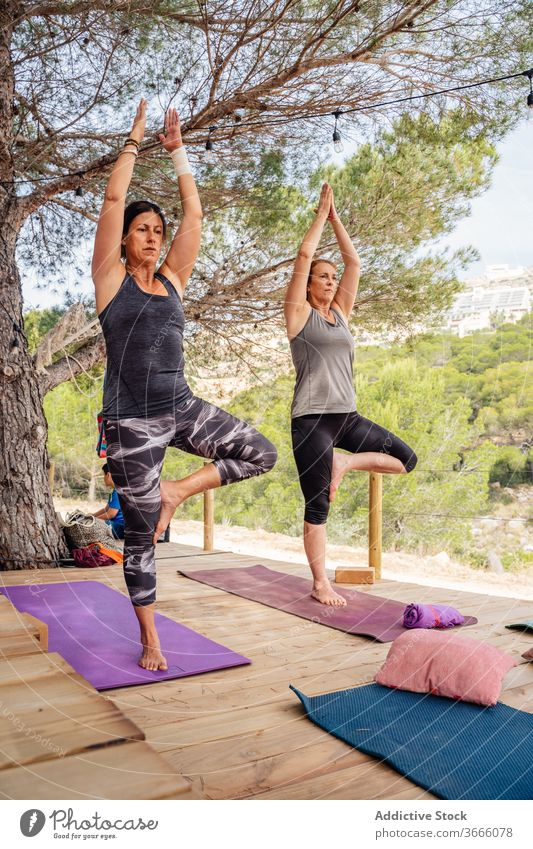 Group of women doing Tree pose on nature practice yoga tree pose balance camp group mat platform health care activity sportswear wooden daylight healthy harmony
