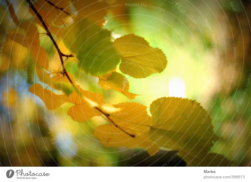 Nature Plant Green Healthy Eating Leaf Calm Environment Yellow Autumn Natural Moody Authentic Wind Joie de vivre (Vitality) Branch
