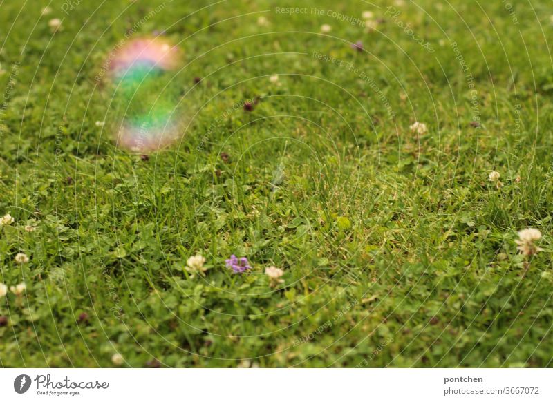 A fuzzy soap bubble hovers over a green meadow with meadow flowers Soap bubble Meadow Blur Children's game reflection fascination Reflection variegated Round