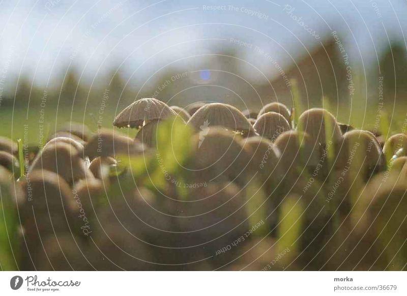 Meadow Grass Mushroom Beautiful weather Attachment Settlement