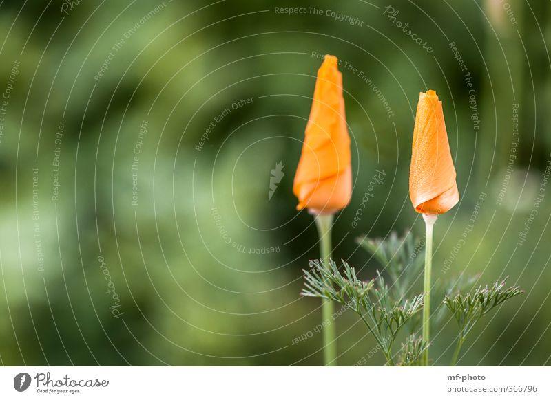 Nature Green Plant Flower Orange