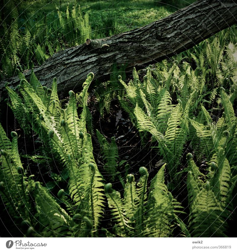 Wood and fern Environment Nature Landscape Plant Climate Weather Beautiful weather Tree Foliage plant Tree trunk Tree bark Fern Pteridopsida Illuminate Growth