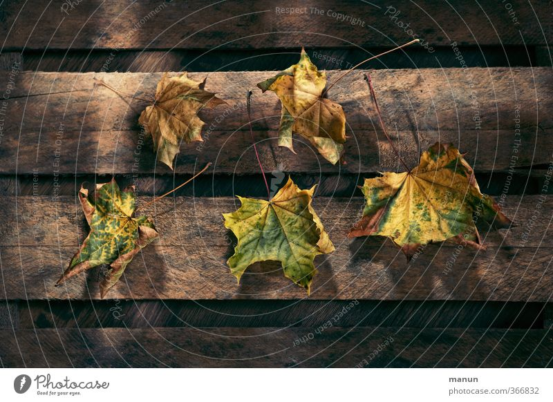 Peel off Nature Autumn Leaf Autumn leaves Autumnal Autumnal colours Wooden board Wooden box Natural Dry Transience Colour photo Structures and shapes Light