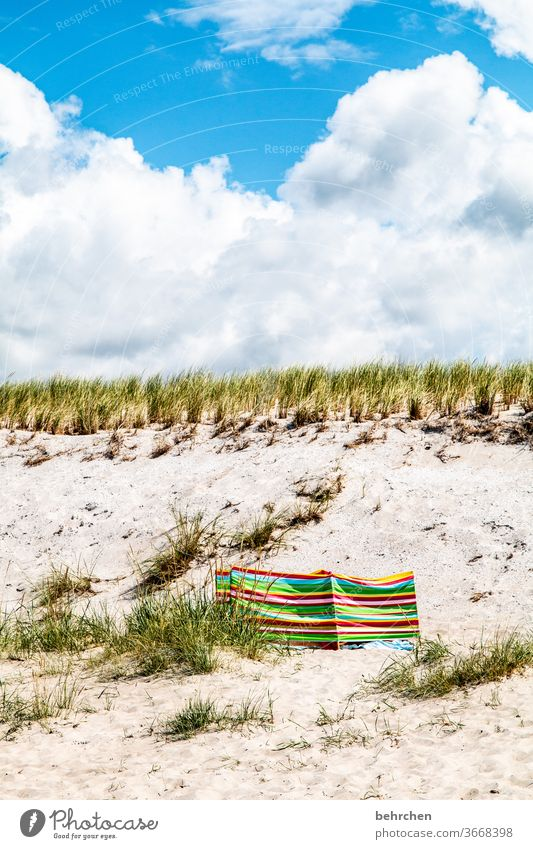 summer sun sunshine sunshine Relaxation Germany fischland-darß Tourism Baltic coast Mecklenburg-Western Pomerania Summer Vacation & Travel Exterior shot