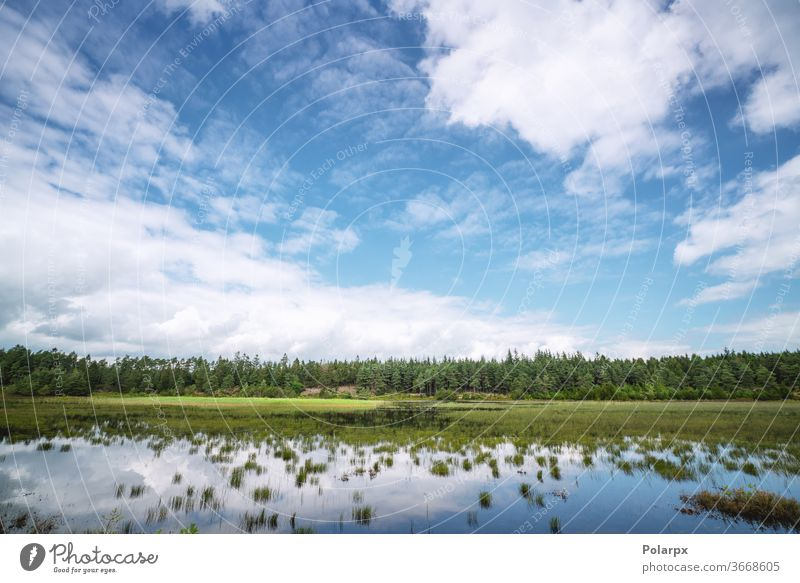 Swamp lake near a green forest wetland countryside moss pine wild beauty spring wood scenery travel park outdoors trees reflections cumulus dark pines birches