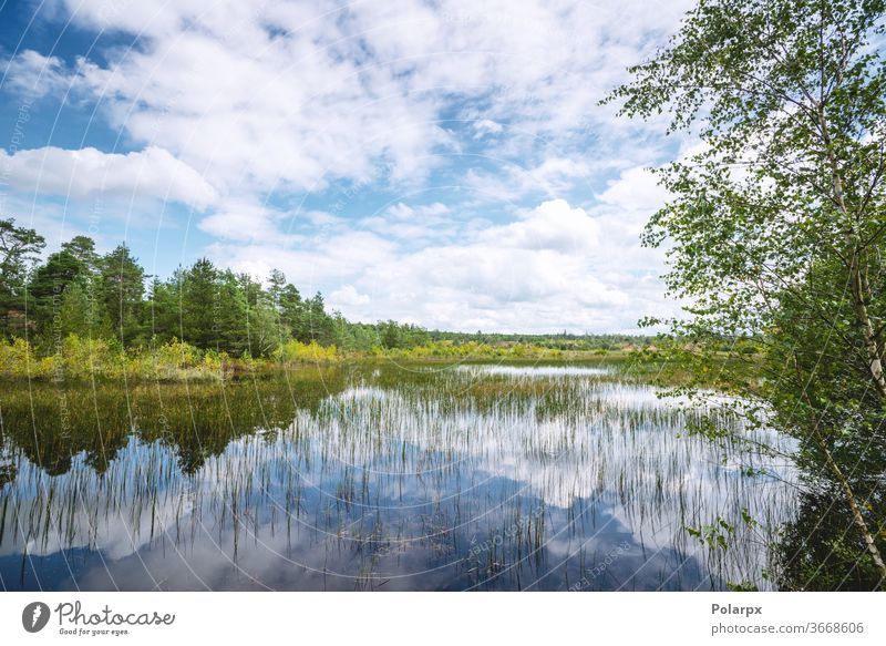 Wetland landscape with colorful trees wetland countryside moss pine wild beauty spring wood scenery travel park outdoors reflections cumulus dark pines birches