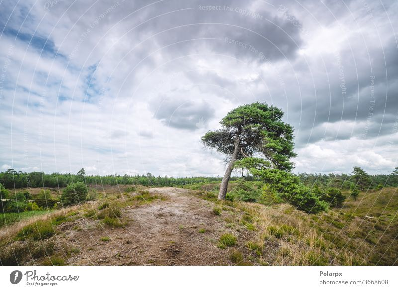 Lonely tree on wilderness plains northern europe tranquil scenic cloud idyllic summer foliage horizontal fall colored vibrant cloudscape autumn trees scene