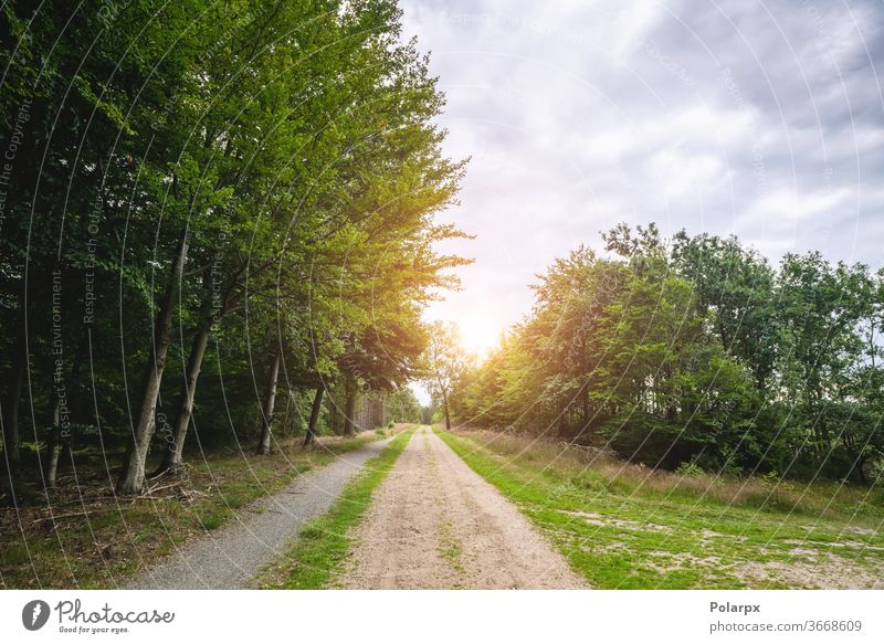 Dirt road in a green forest in the spring water flooded cloudy season adventure foliage travel tourism park mountain grass sky blue outdoors trail gravel road