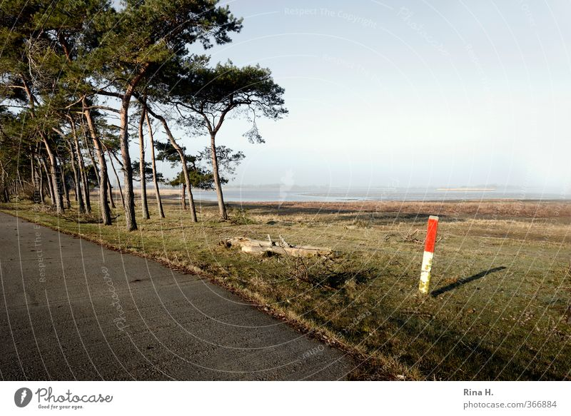 mark Nature Landscape Spring Beautiful weather Fog Meadow Forest Bay Boddenlandscape NP Rügen Street Pole Signs and labeling Natural Pine Morning Colour photo