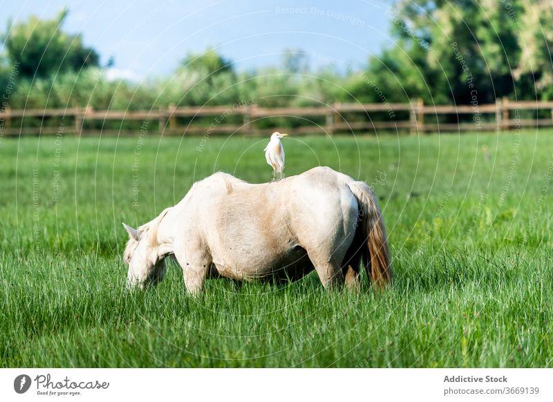 Horse grazing in green meadow graze horse pasture field lush natural grass nature catalonia spain animal mammal equine rural grassland park scenic peaceful