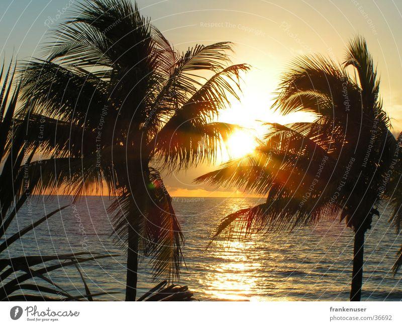 Beach USA Sunrise Americas Palm tree Coast Florida Miami Fort Lauderdale