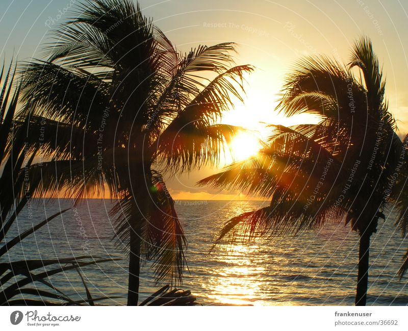 Sunrise at the coast of Fort Lauderdale Florida Americas Palm tree Beach Miami USA