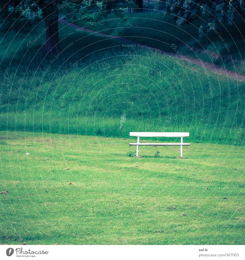an empty bench Nature Tree Grass Park Hill Natural Green White Disappointment Loneliness Bench 1 Slope Lanes & trails Isolated Deserted Peaceful Colour photo